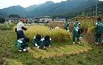 めだかの学校  稲刈り体験活動にいってきました