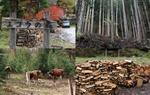 岩手県平泉、宮城県の木質バイオマス活用の先進地域での視察報告